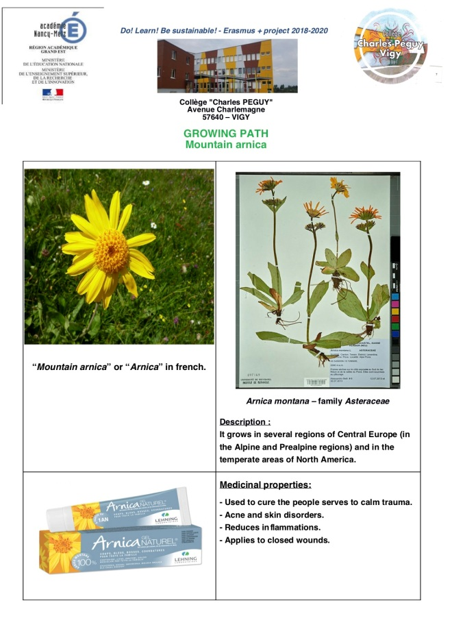 Technical-sheet_Arnica